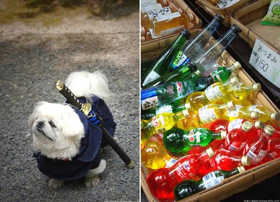 Oharame_ninjadog