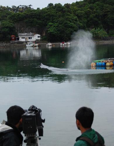 Whale_07