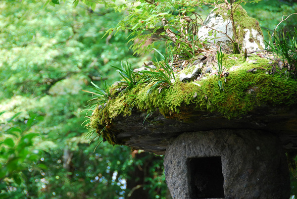 Moss_temple08