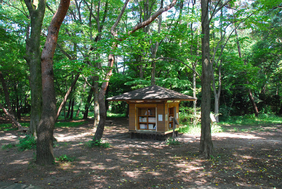 Forest_library1_2