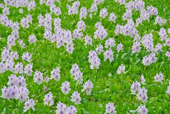 Unknown_flower1_2