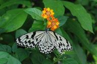 Butterfly_8