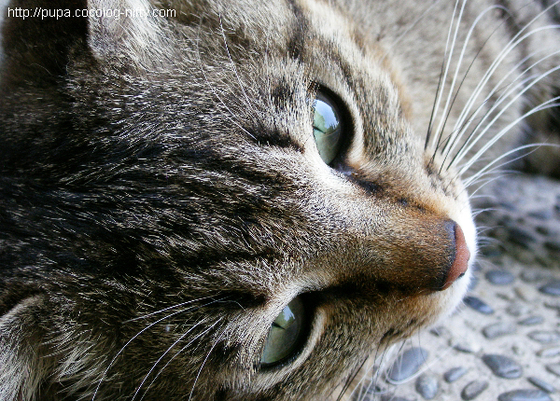 Asuka_cat5