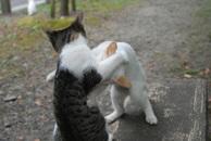Catfight_1