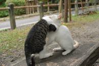 Catfight_2