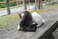 Catfight_3
