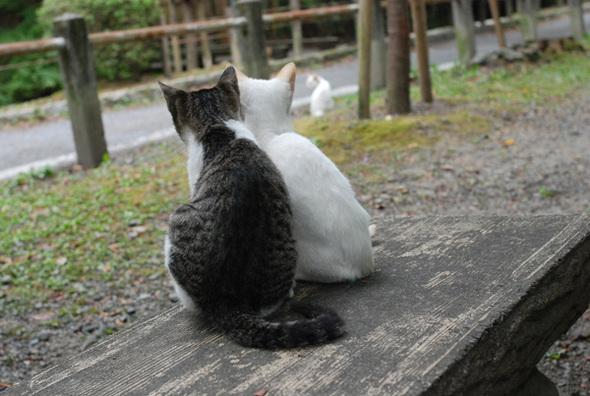 Catfight_4