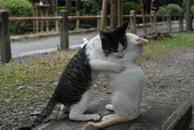 Catfight_6