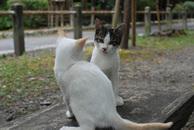 Catfight_7