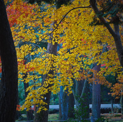 Autum_colors_4