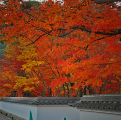 Autum_colors_5