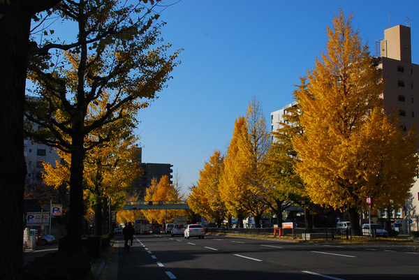 Autum_colors_7