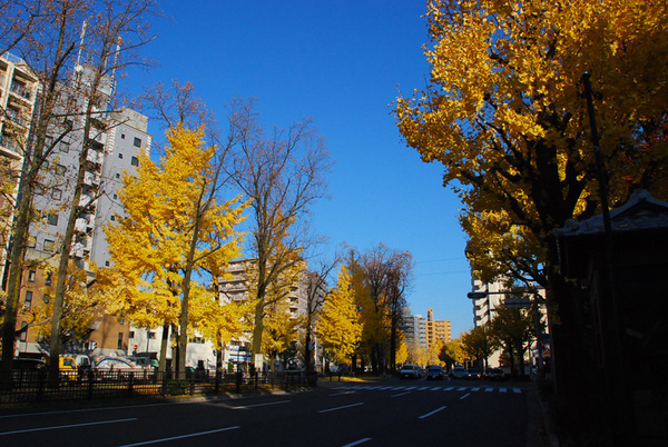 Autum_colors_8
