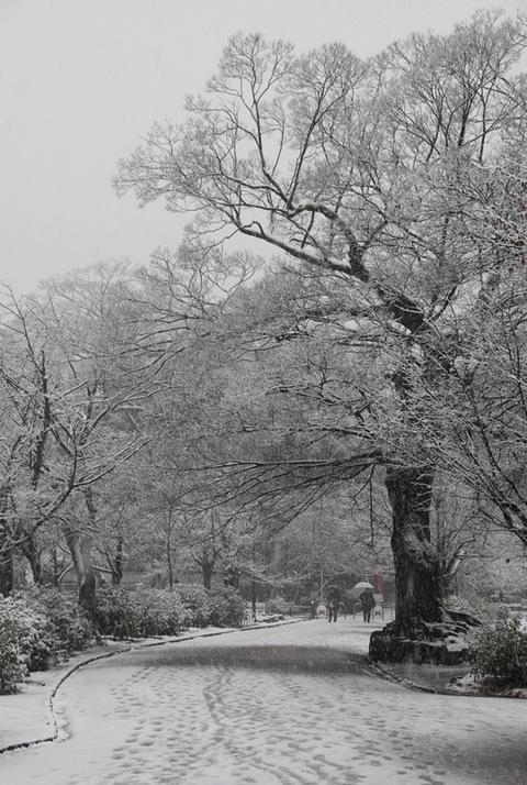 Snow_kyoto_1_2