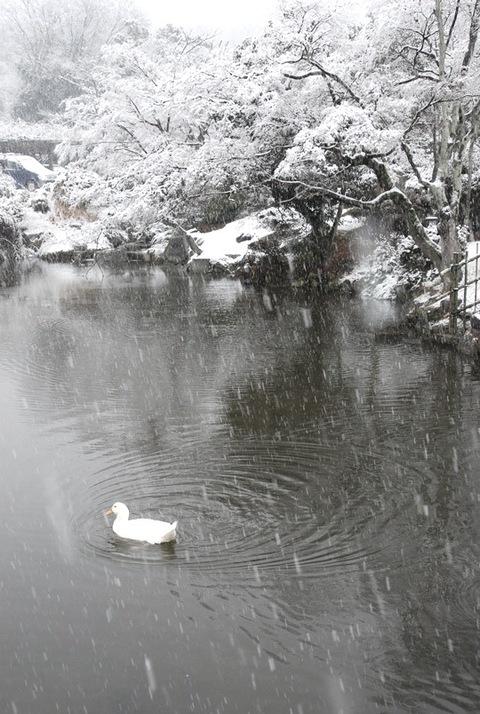Snow_kyoto_2_2