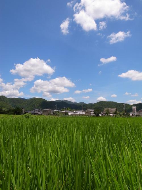 Summer_4