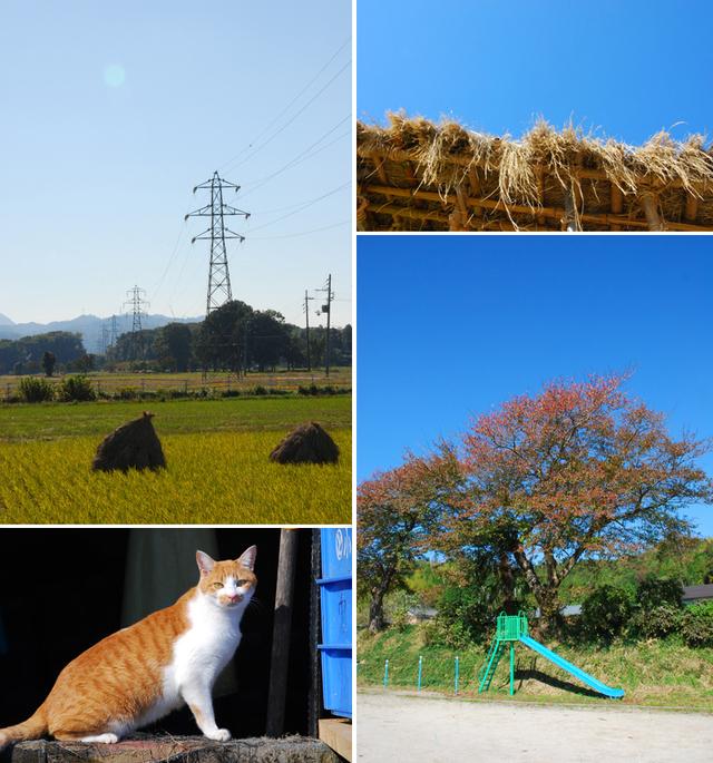 Hoshigaki_04