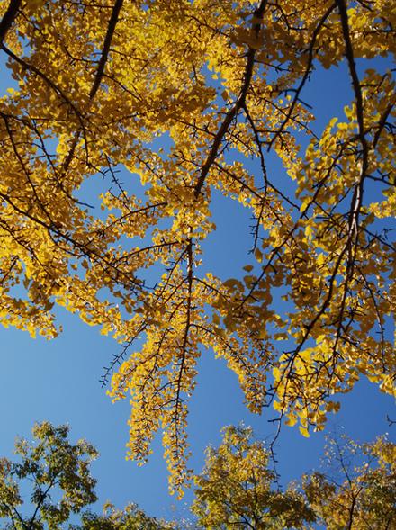 Kouyou2010_04