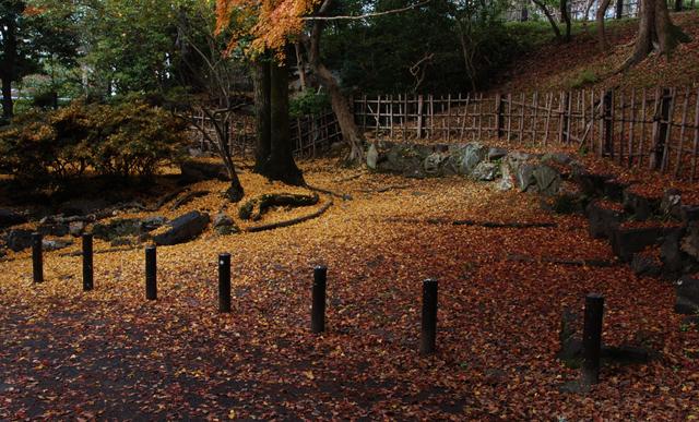 Kouyou2010_05