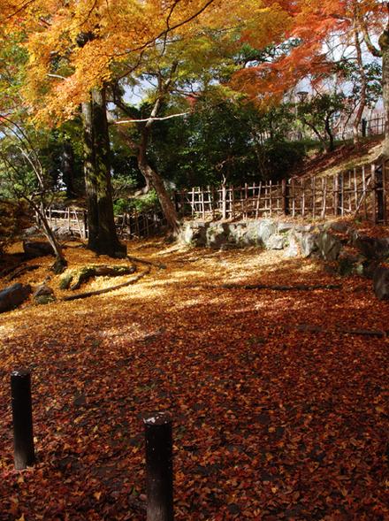 Kouyou2010_06
