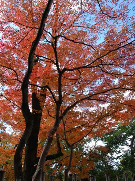 Kouyou2010_07