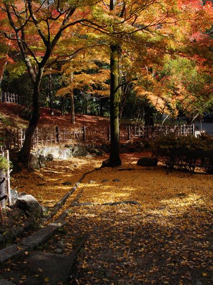 Kouyou2010_09