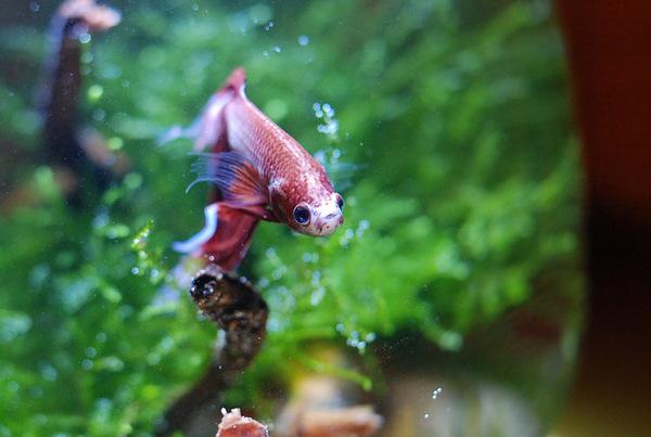 Rumblefish_1_2