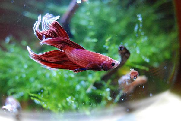 Rumblefish_2