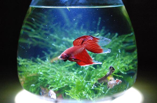 Rumblefish_3