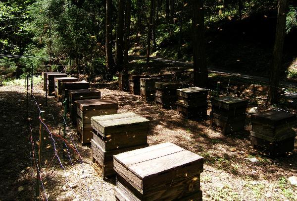 Honeybee_2_2