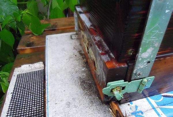 Rainstorm_3
