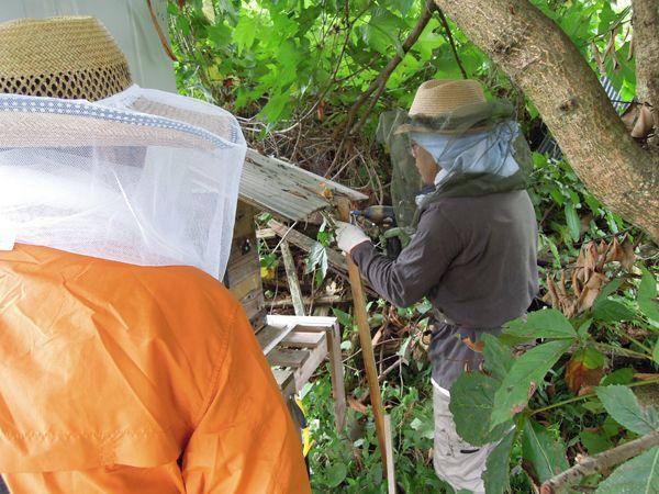 Honeyharvest_01