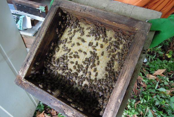 Honeyharvest_02