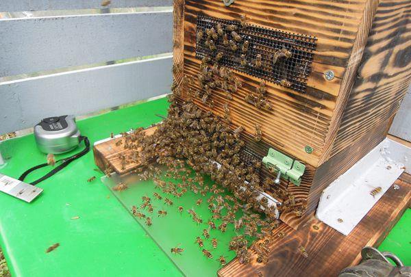 Honeyharvest_06