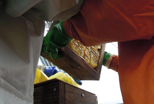 Honeyharvest_07
