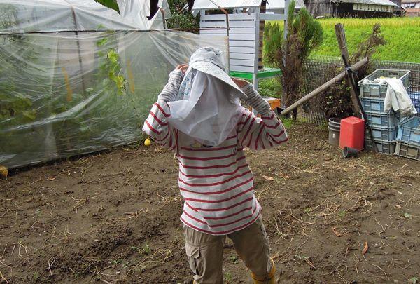 Honeyharvest_1b
