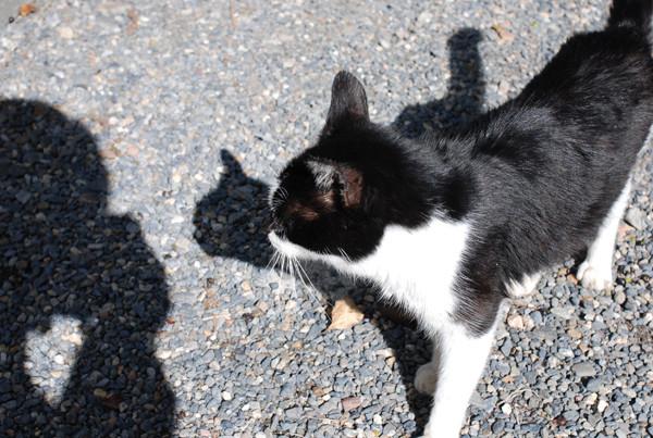 Cat_07
