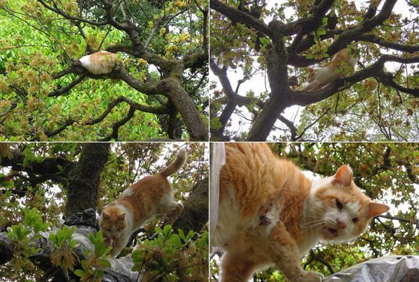 Cat_09