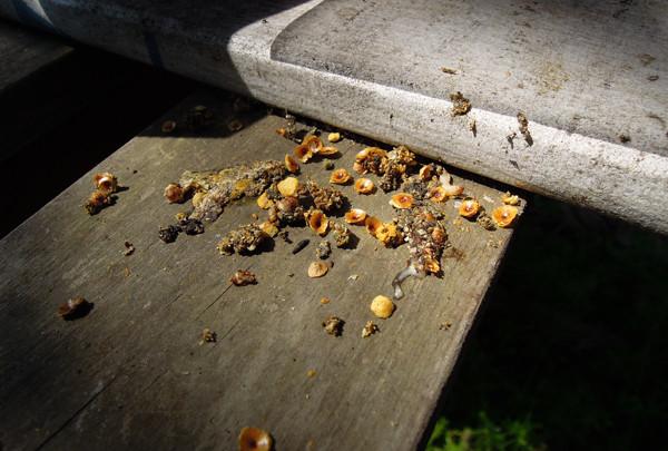 Swarming_09
