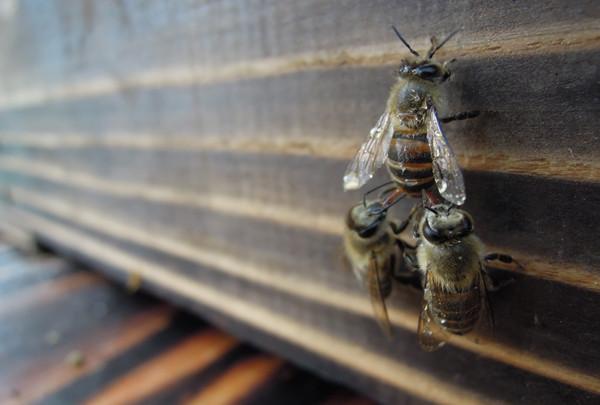Swarming_10