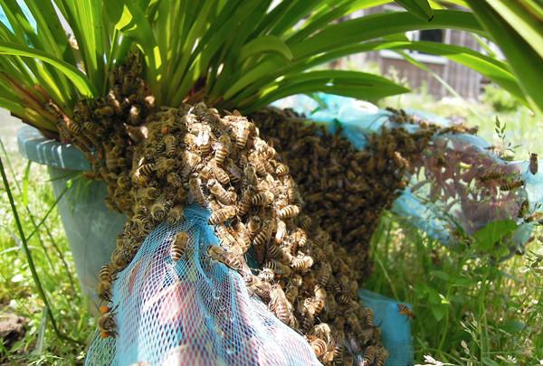 Swarming2_02