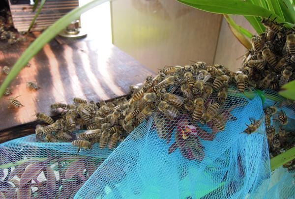 Swarming2_04