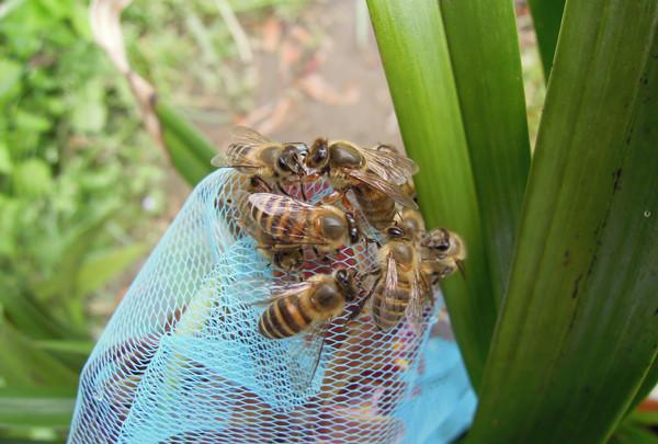 Swarming2_07
