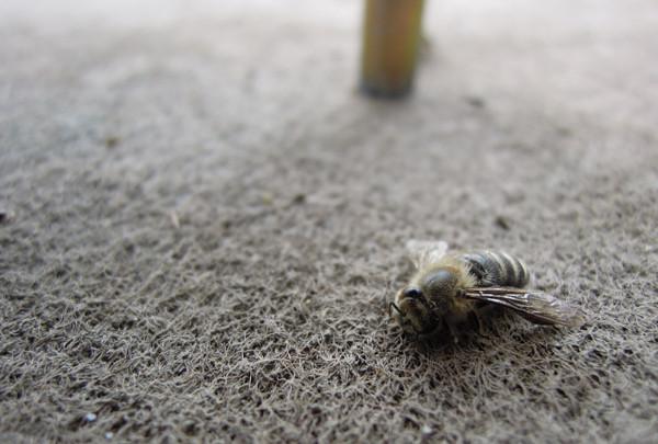 Swarming2_09