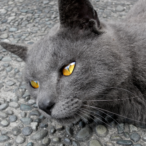 Bluecat_00