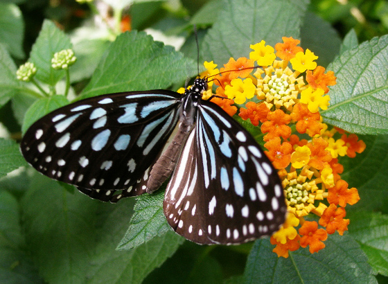 Butterfly_00