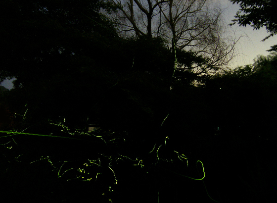 Fireflies_01