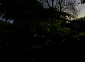Fireflies_02