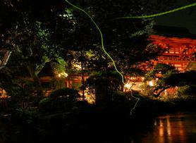Fireflies_1