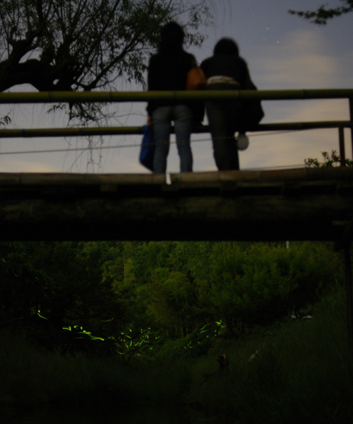 Fireflies_1_1
